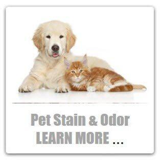 professional pet urine cleaning stafford va | professional pet  stain removal stafford va | professional pet  odor removal stafford va